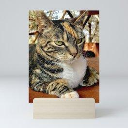 Lioness (Lanai Cat Sanctuary) Mini Art Print