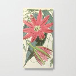 Passiflora antioquiensis Metal Print