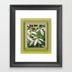 Spring Snowdrops Framed Art Print