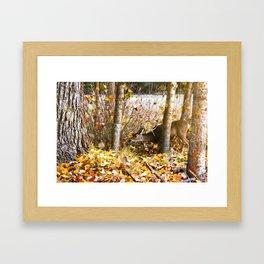 Deer In The Aspens Framed Art Print