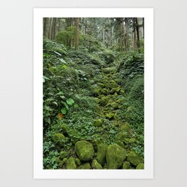 Forest Bed Art Print