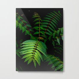 Illuminated Fern Leaf In A Dark Forest Background Metal Print