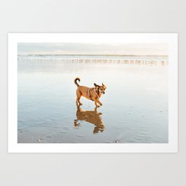One dog and the sea Art Print