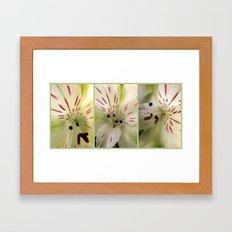 Lily Times Three Framed Art Print
