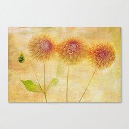 Three Dahlia-ings Canvas Print