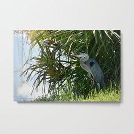 Shady Blue Heron Metal Print