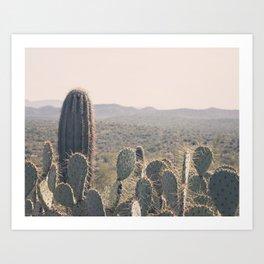 Arizona Cacti Art Print