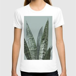 Snake plant in green T-shirt