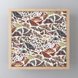Moths of North America Pattern Framed Mini Art Print