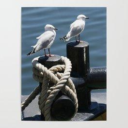 Seagulls on a Bollard at the Docks Poster