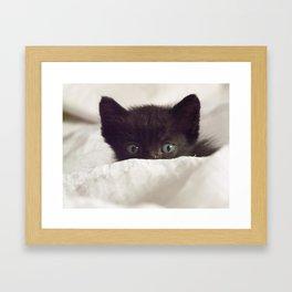 Zeze kitten Framed Art Print
