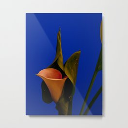 Calla lily on blue Metal Print