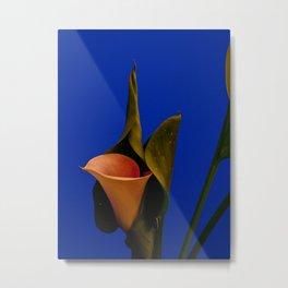 Calla lily on blue Metal Print