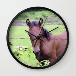 Tropical Island Horse Behind Barbed Wire Fence Wall Clock