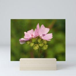 Prairie Mallow Flowers and Seed Pods Mini Art Print