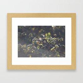 Nettles Framed Art Print