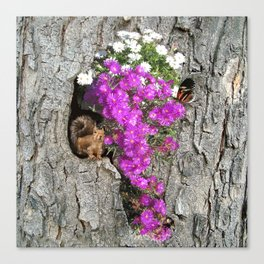 Flowering Vygies and a Squirrel in a tree Canvas Print
