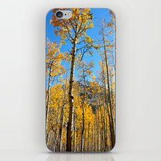 Enchiladas in the Trees 2 iPhone & iPod Skin