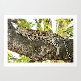 A Leopard's Gaze Art Print