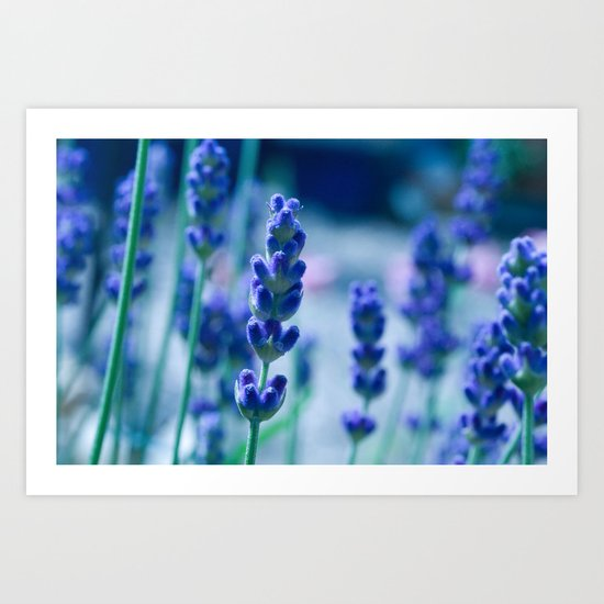 A Touch of blue - Lavender #1 Art Print