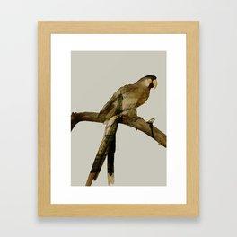 Parisian Parrot Framed Art Print