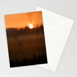 Reed grass plumes at golden sunset Stationery Cards