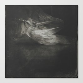 Last of the tulle... Canvas Print