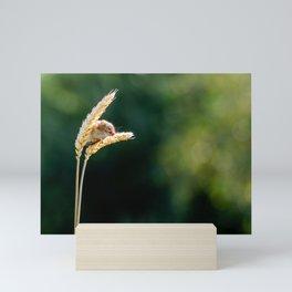 Balancing Act. Mini Art Print