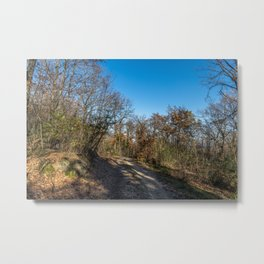 Autumnal path through the woods Metal Print