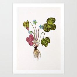 Anemone Hepatica Art Print