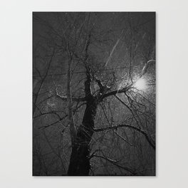 Naked Tree in a Flurry Canvas Print