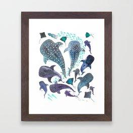 Whale Shark, Ray & Sea Creature Play Print Framed Art Print