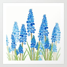 blue grape  hyacinth forest Art Print