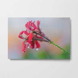 Red pelargonium flower Metal Print