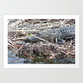 Gator close-up Art Print