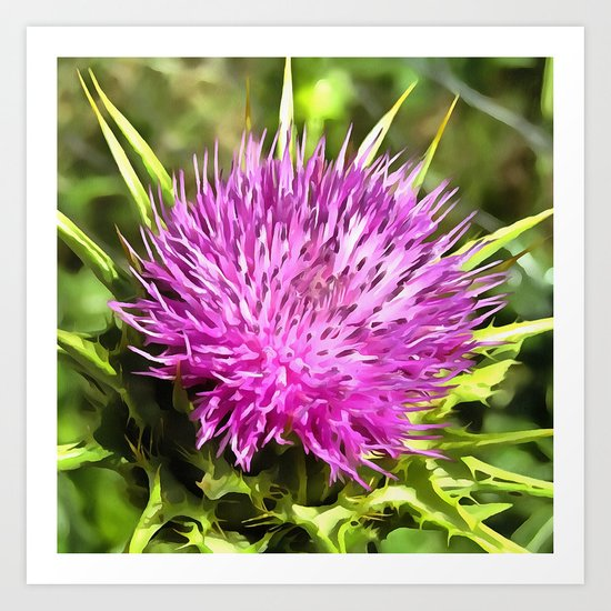 Purple Thistle Wildflower Art Print