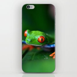 Little Tree Frog (Color) iPhone Skin