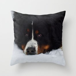 Bernese mountain dog in snow. Throw Pillow