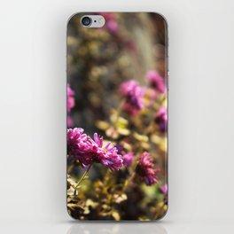 November Daisies iPhone Skin