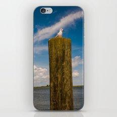 Apalachicola Seagull I iPhone & iPod Skin