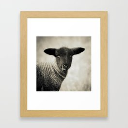YOUNG LAMB - OLD FRIENDS COLLECTION Framed Art Print