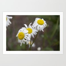 More flowers Art Print