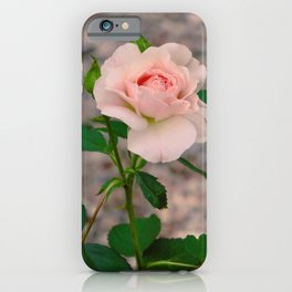 blush rose iPhone Case