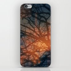 Trees In The Golden fog iPhone & iPod Skin