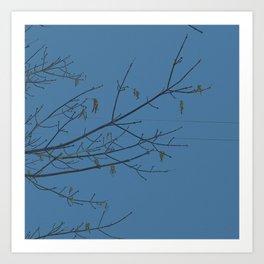 free branch Art Print