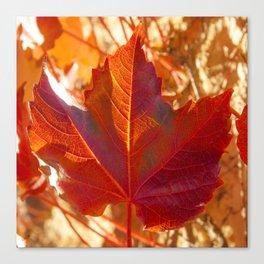 maple leaf. Autumn in Zamora. Spain Canvas Print