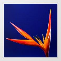 Flower orange blue 7 Canvas Print