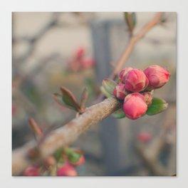 Spring Buds Canvas Print