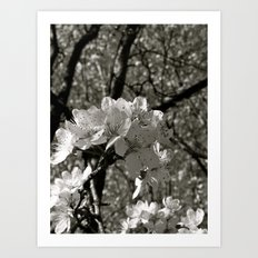 Places in Black & White: Plum Tree 20 Art Print