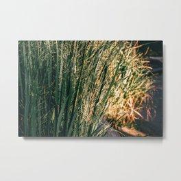 Golden Hour Grass Metal Print